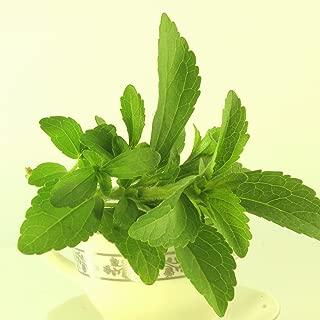 Best stevia plant seeds Reviews