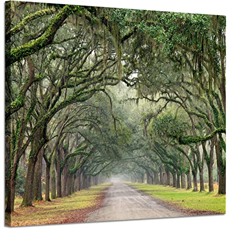 Amazon Com Youk Art Decor 3 Panels Morning Sunrise Green Trees Landscape Sunshine Over Forest Photograph Printed On Canvas For Home Wall Decoration Green 16x24inchx3 Posters Prints