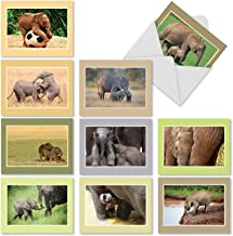 10 Adorable Baby Elephant Note Cards with Envelopes, Boxed Set of 'Tiny Tusks' Blank Greeting Cards, All-Occasion Stationery for Baby Showers, Birthdays, Thank Yous 4 x 5.12 inch - NobleWorks M1628BN