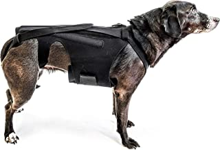 L'il Back Bracer Dog Back Brace for IVDD, Dog Back Pain Relief, Arthritis, Dachshunds, Corgies