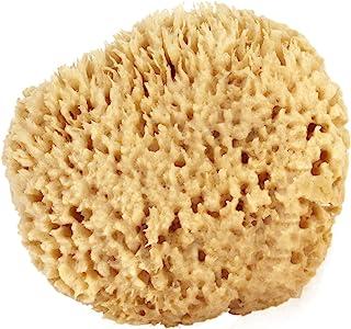 Sea Wool Sponge 15cm - 18cm (X-Large) by Bath & Shower Express A A Natural Renewable Resource