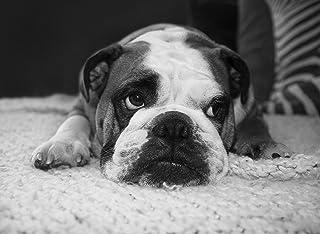 Regali Bulldog Inglese Per Gli Amanti Dei Cani, Poster Stampe Su Tela Varie Dimensioni, Regalo Amante Del Bulldog Inglese,...