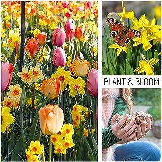 Mejor Anemona Flor Bulbo de 2020 - Mejor valorados y revisados