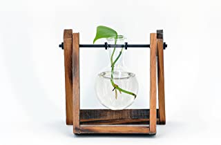 Turbo Snail Decorative Clear Glass Planter Bulb Vases with Rustic Wood and Metal Swivel Holder Stand (1T)