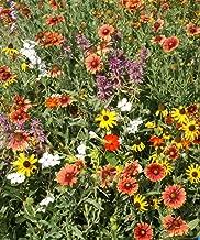 Florida & Gulf Coast Wildflower Mix Seeds Deep South Flower Blend ST22 (6400 Seeds, 1/2 oz)