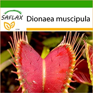 SAFLAX - Venus atrapamoscas - 10 semillas - Con sustrato estéril para cultivo - Dionaea muscipula
