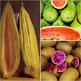 2 Gram Banana Cantaloupe Melon Seed, 0.25 Ounce Charleston Gray Watermelon Seed, 1 Gram Golden Midget Watermelon Seed
