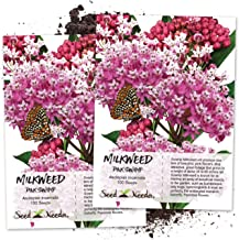 Seed Needs, Pink Swamp Milkweed Seeds for Planting (Asclepias incarnata) Twin Pack of 100 Seeds Each Untreated