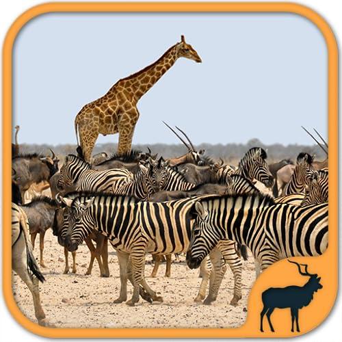 Juegos de animales salvajes gratis - Juegos de Zoológico: África