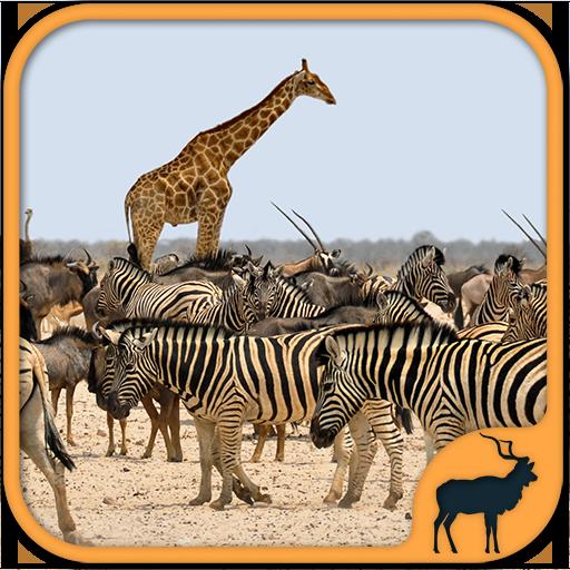 Giochi di Animali gratis dello Zoo - Zoo Safari