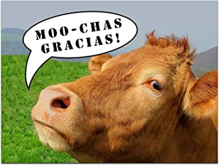 Thank You Cards - Cow - Humor - Moochas Gracias - Blank on the Inside - Includes Cards and Envelopes - 5.5