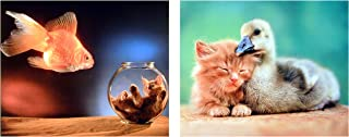 Best fish bowl photo gallery Reviews
