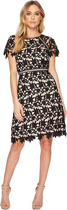 Adrianna Papell - Ava Lace Trimmed A-Line Dress