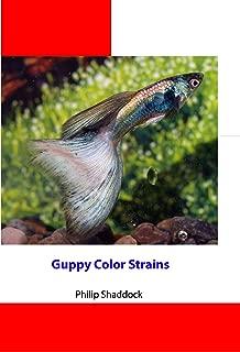 Guppy Color Strains