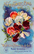 A SLICE IN TIME 1893 - Philadelphia, Pennsylvania Burpee New Sweet Peas Vintage Flowers Seed Packet Travel Advertisement Poster. Poster measures 10 x 13.5 inches