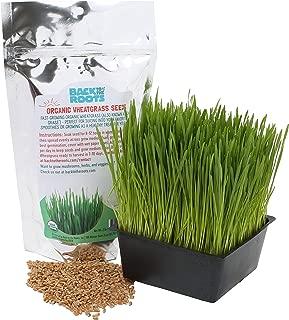 wheatgrass seeds canada