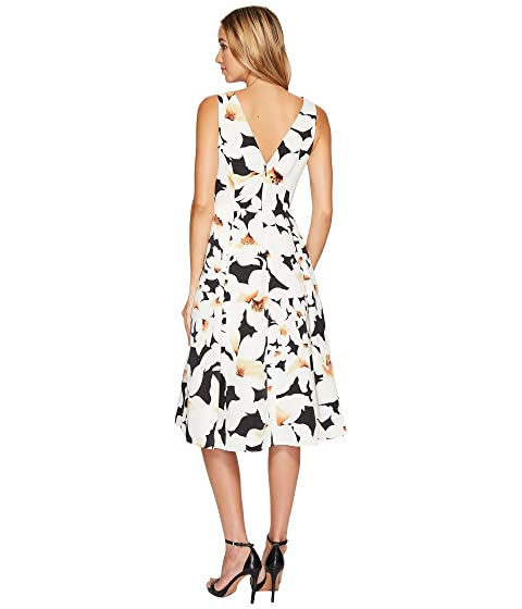 and Lily Floral Fit Papell Flare Adrianna Dress wSIFpq7a