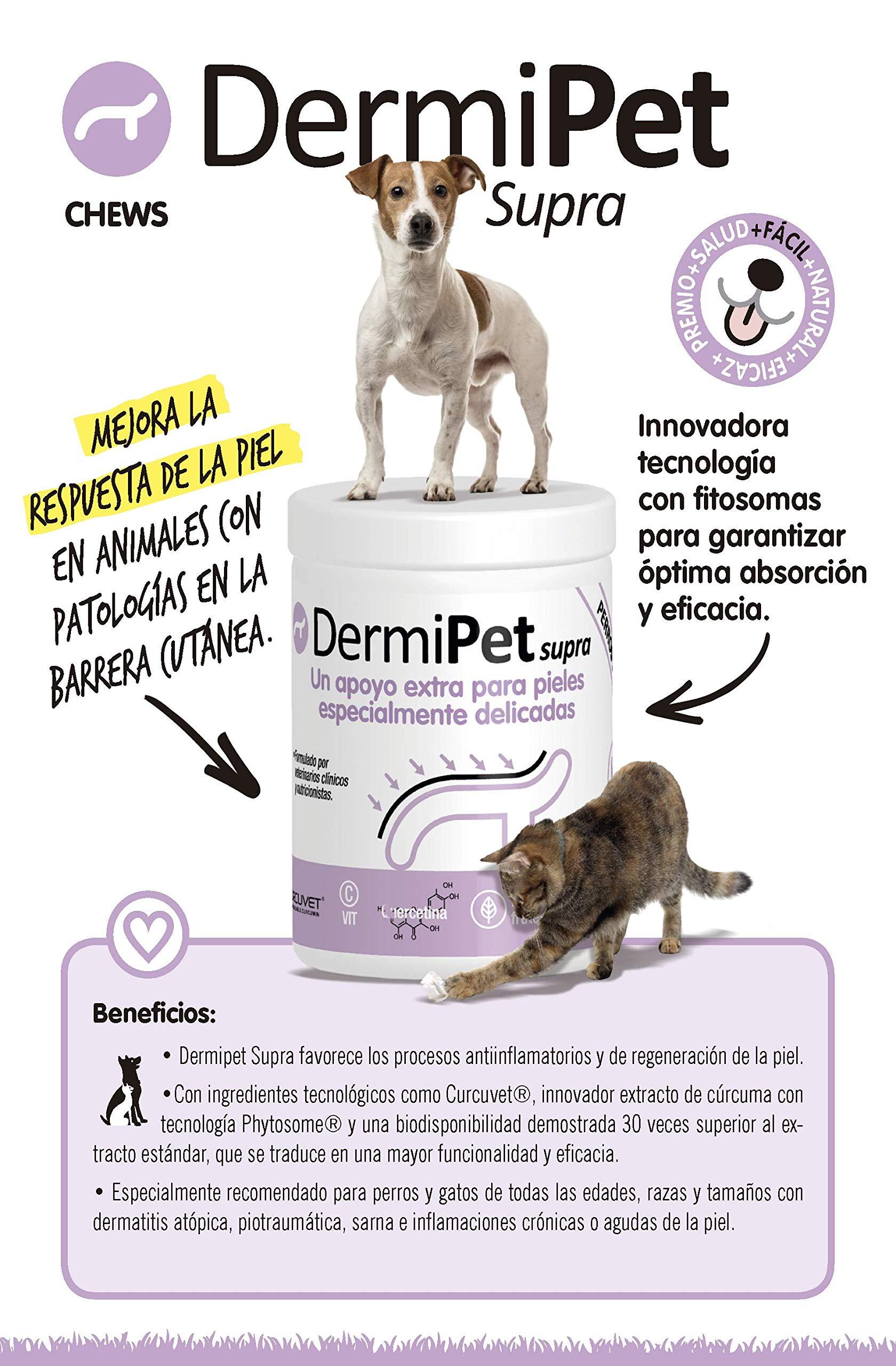 DERMIPET Supra. Alergias e Intolerancias en Gatos y Perros. Perilla Frutescens, Rihzoma Curcumae, Quercetina, Vitamina C: Amazon.es: Productos para mascotas