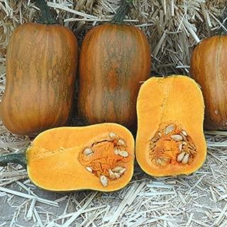 Honeynut Butternut Squash 20 Seeds Smaller Size Higher Yields Than Butturnuts