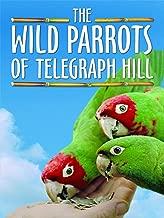 Best parrots of telegraph hill Reviews