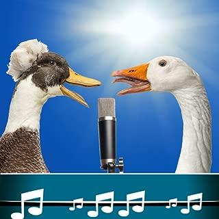 Bird Sound Ringtones