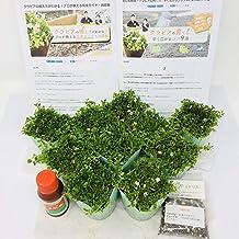 クラピア K7 10ポット すくすくセット 9cmポット苗 10株 肥料2種類(メネデール、有機一発肥料) マニュアル付き グランドカバー スーパーイワダレソウ