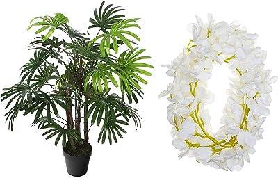 Fourwalls Decorative Artificial Rhapis Excelsa Plant (AP 120 cm Rhapis XS/11325) + Artificial Hanging Butterfly Orchid (10 cm x 10 cm x 180 cm, White, Set of 2)