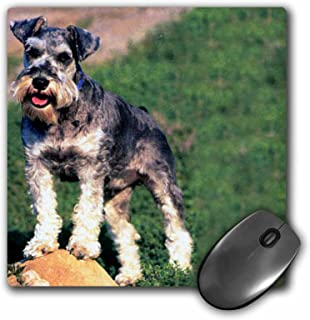 3dRose LLC 8 x 8 x 0.25 Inches Mouse Pad, Schnauzer (mp_259_1)