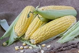 Honey Select Hybrid Corn Seeds