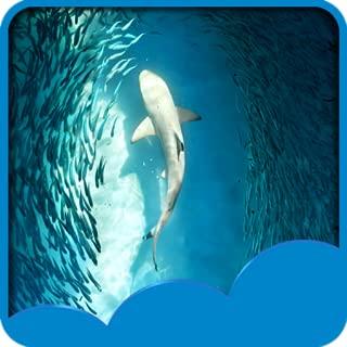Ocean Live Wallpapers