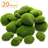 Top 10 Best Floral Moss of 2020