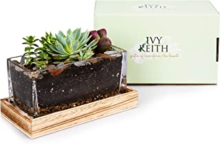 IvyKeith Leakproof Terrarium Farmhouse Wooden and Glass Easy to Plant Container Decor Flower Pot Planter DIY Display Box for Succulent Fern Moss Air Plants Miniature Fairy Garden Gift (No Plants)
