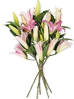 Benchmark Bouquets 8 Stem Stargazer Lily Bunch, No Vase (Fresh Cut Flowers)