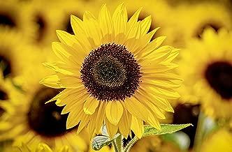 美しいひまわり写真集 Beautiful sunflower photo book (English Edition)