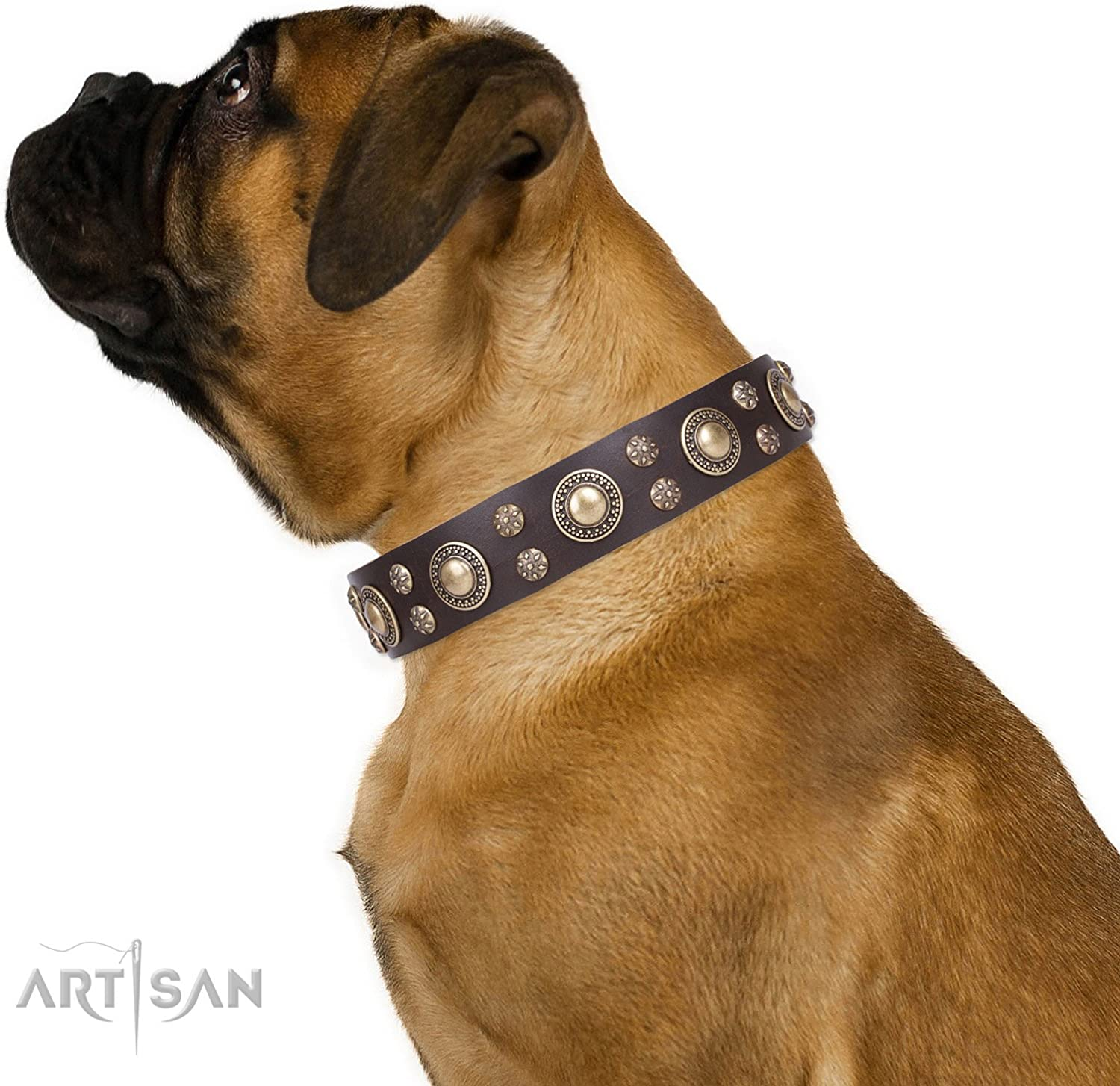 FDT Artisan 22 inch Brown Leather Dog Collar with Brass Plated Decorations   Sophisticated Beauty