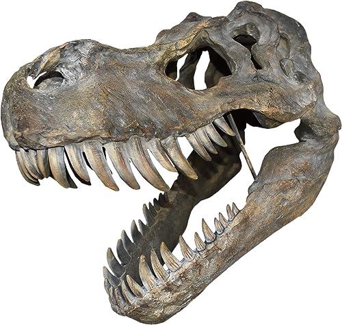 Nemesis Now Tyrannosaurus Rex Plaque Murale Motif tête de Mort Marron Taille Unique 51,5 cm