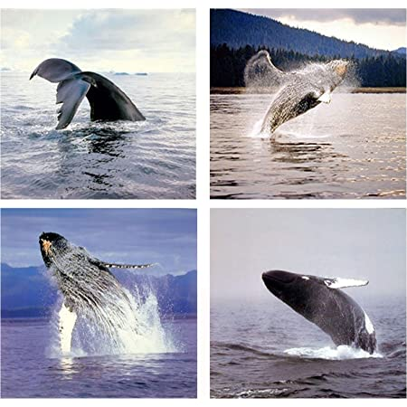 Amazon Com Ocean Wall Decor Humpback Whale Sea Underwater Animal Picture 16x20 Four Set Art Print Poster Posters Prints