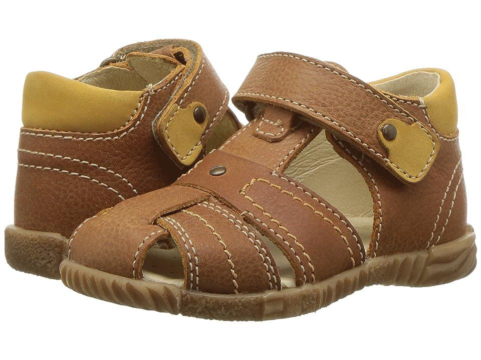 Primigi Kids PBF 14060 (Infant/Toddler) (Brown) Boy