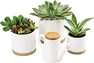 Ceramic Planters by Oasis Plant Pots – 3X Small White Planter Pots with Bamboo Trays and Matching Watering Can! Ceramic Pots for Plants, Indoor Flower Pot, Mid Century Modern Planter for Succulents