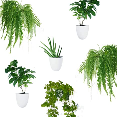 Amazon Com Set Of 6 Round Wall Planters Lightweight And Easy To Install Design Your Own Vertical Garden Melamine Plastic Kitchen Dining
