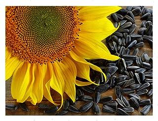 bulk sunflower oil for sale