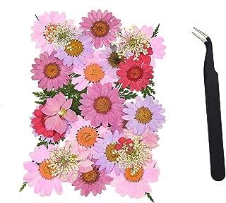 AQUEENLY Dried Pressed Flowers, Real Daisy, Larkspur, Hydrangea Macrophylla, Lace Flower, Artemisia Carvifolia Leaf and Fern Leaf with Tweezer for Art, DIY, Craft