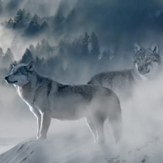 Gray Wolf Sounds & Gray Wolf Calls - Great for Graywolves!