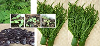 TOMHY Seeds Package: 20 Seeds Thai Cha-Om,Senegalia Pennata from My Garden