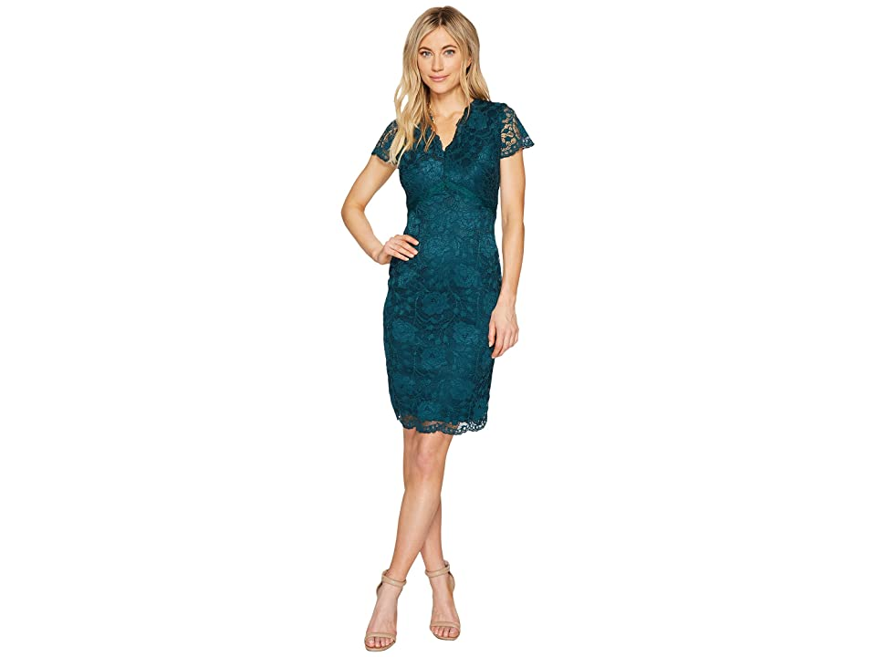 Ellen Tracy Lace Dress with Short Sleeves and V-Neck (Pine) Women