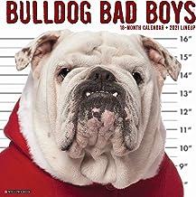 Bulldog Bad Boys 2021 Wall Calendar (Dog Breed Calendar)