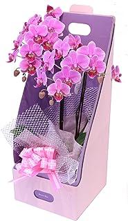 プレゼントに最適!ピンク系テーブル胡蝶蘭【リンリン】 with ギフトラッピング『2本立ち・2WayギフトBOX入り・メッセージ対応』生産者から日本全国へ胡蝶蘭をお届けいたします。