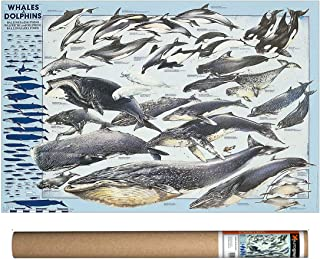EuroGraphics Whales & Dolphins Poster, 38.5 x 26.75 inch
