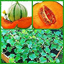 10 Charentais French Cantaloupe Melon Seeds Juicy & Sweet Delicious Fresh