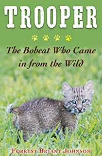 Best bobcat cat price Reviews